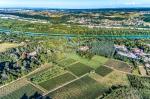 Vigne Dans Le Rhone